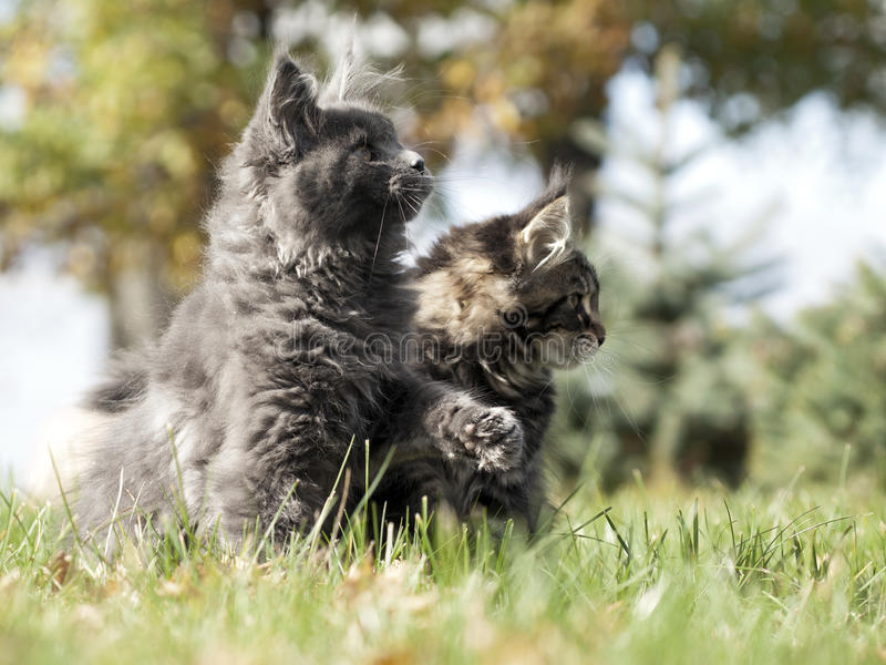 Download Two nice kittens stock image. Image of nice, little, grass - 22652529