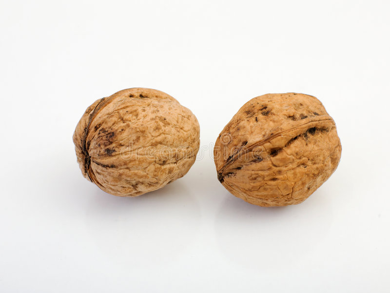 Two nuts. Laying beside on a white background stock photo