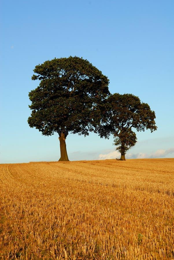 Free Two Oak Trees In Autumn Scene Stock Photos - 6731463