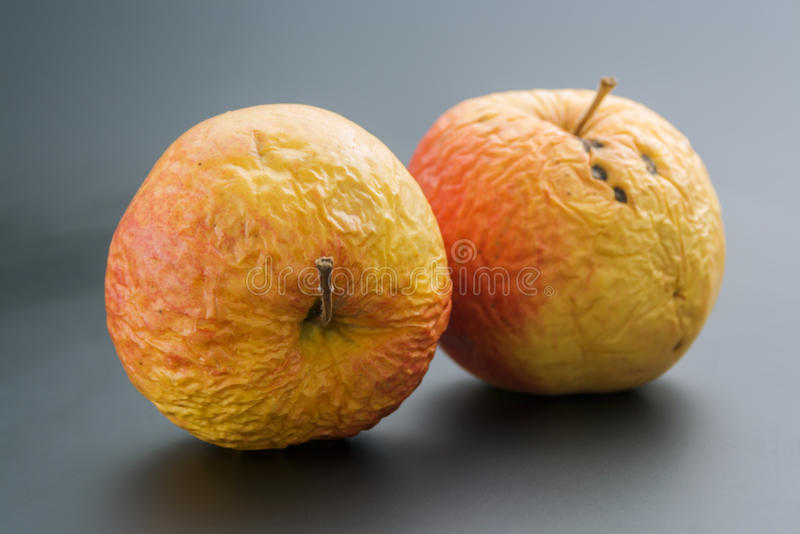 Two old apples. Pair of whole overripe wrinkled old apples close up on neutral background stock images