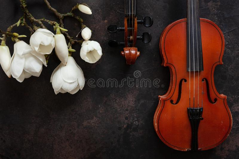 Two Old violins and blossoming magnolia brances. Top view, close-up on dark vintage background.  royalty free stock photos