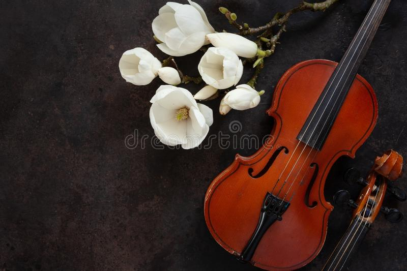 Two Old violins and blossoming magnolia brances. Top view, close-up on dark vintage background.  royalty free stock images