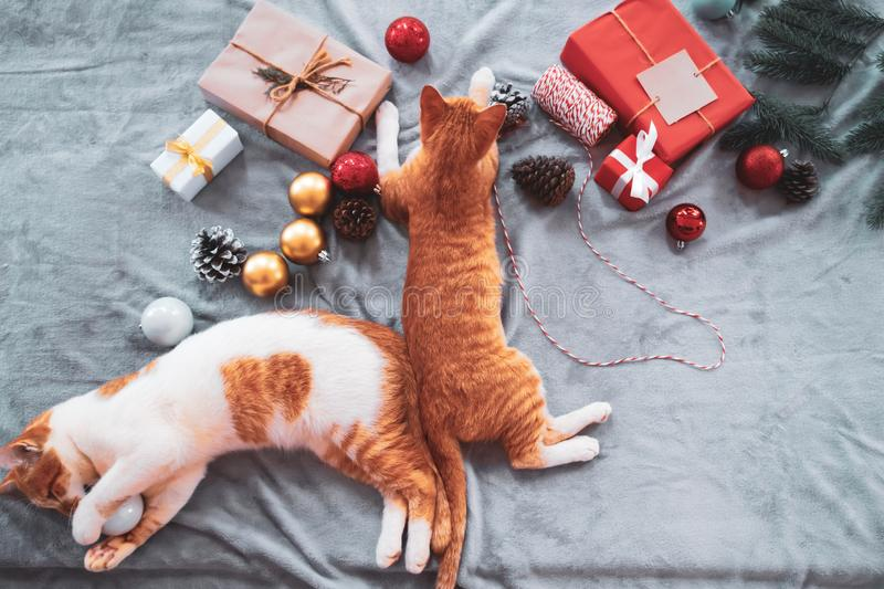 Two orange kittens on carpet in christmas holiday with decoration and ornament. Domestic cute cat in winter and sunlight warm stock photo
