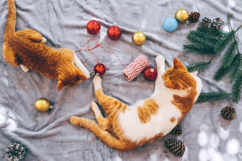 Two orange kittens on carpet in christmas holiday with decoration and ornament. Domestic cute cat in winter and sunlight warm royalty free stock photo