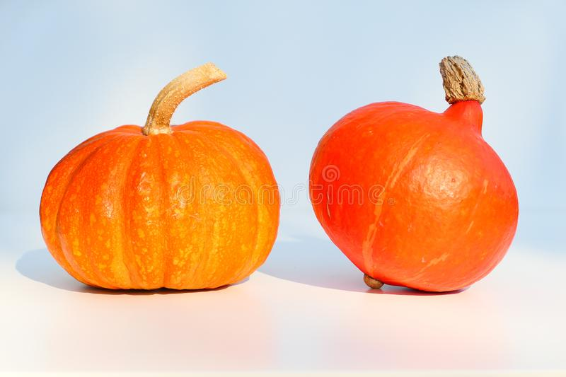 Two orange pumpkins, different varieties royalty free stock photos