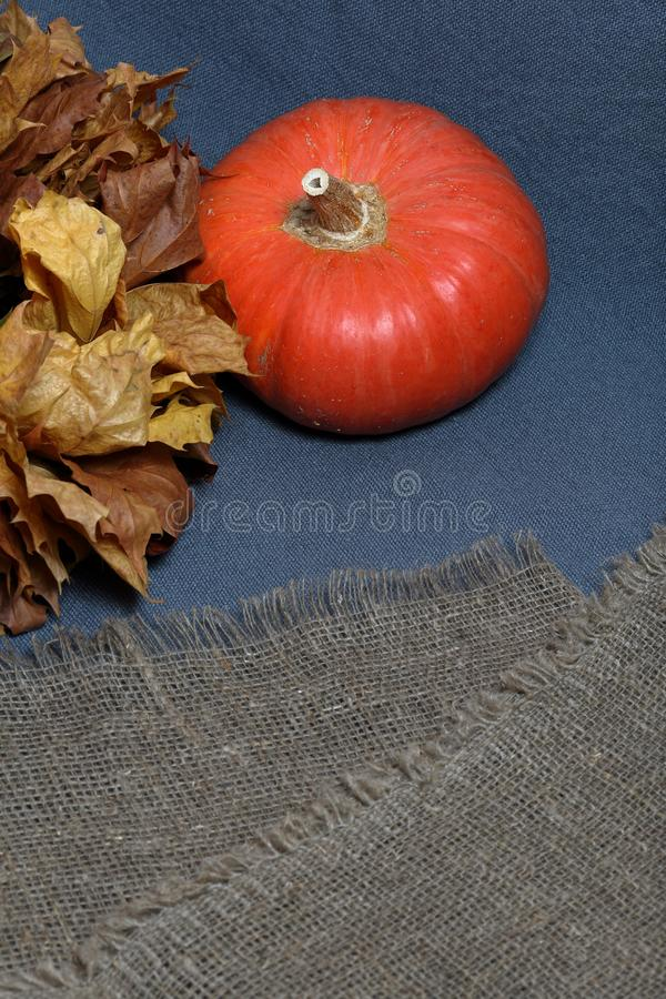 Two orange ripe pumpkins. Lie on a gray background. Nearby are dried autumn leaves and coarse linen cloth royalty free stock photo