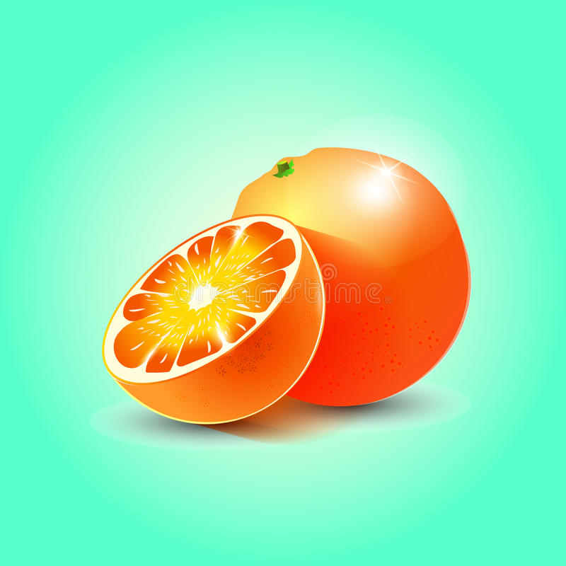 Two oranges. Vector image of two oranges and a half whole with glare and shadow on a blue background royalty free illustration