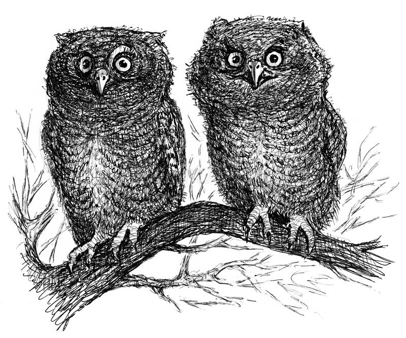 Two owls