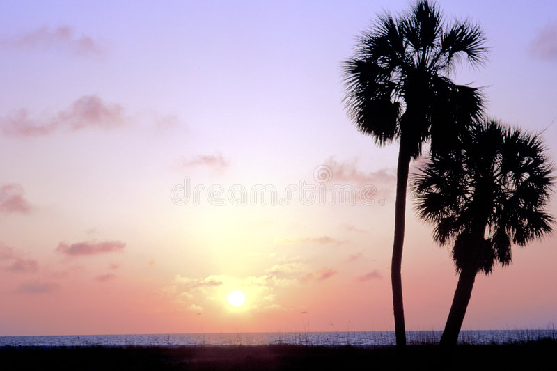 Download Two Palm Trees stock photo. Image of florida, silouette - 40546