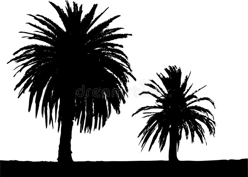 Two palm trees. Vector illustration- two palm trees silhouette royalty free illustration