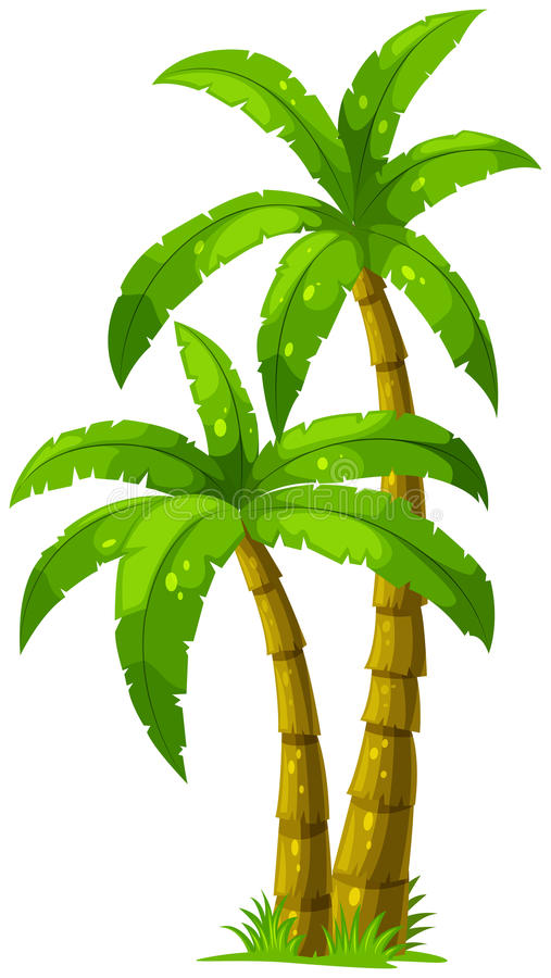 Two palm trees. Illustration of the two palm trees on a white background vector illustration