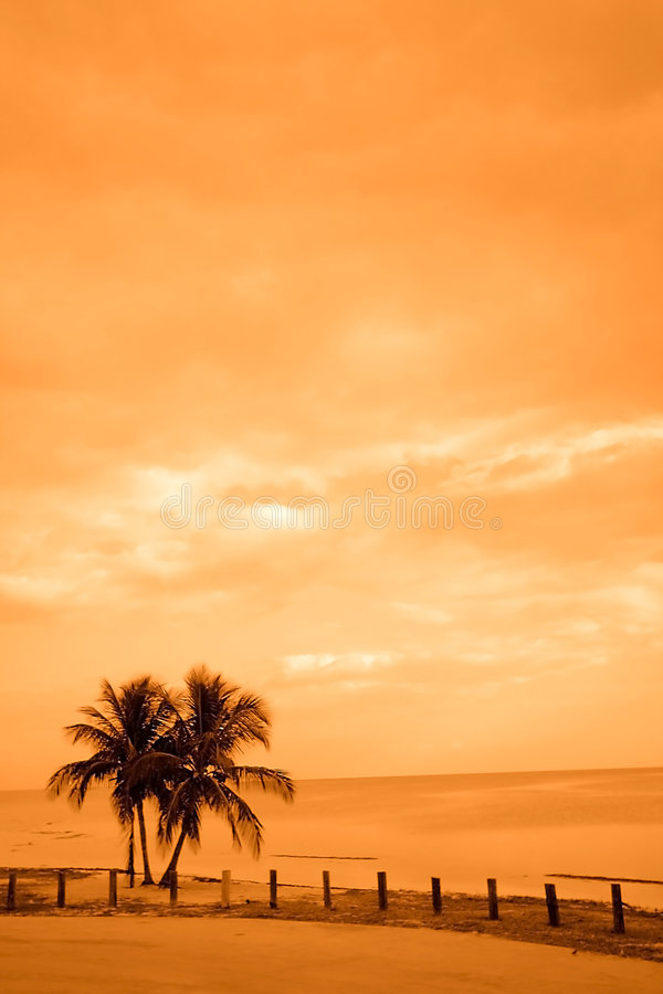 Two Palm Trees By The Ocean stock image