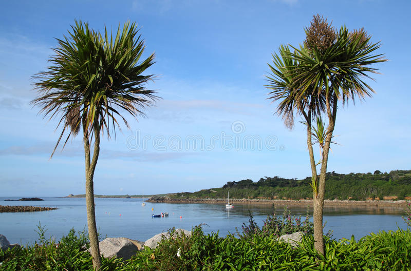 Two palm trees, Porthcressa Isles of Scilly. stock photos