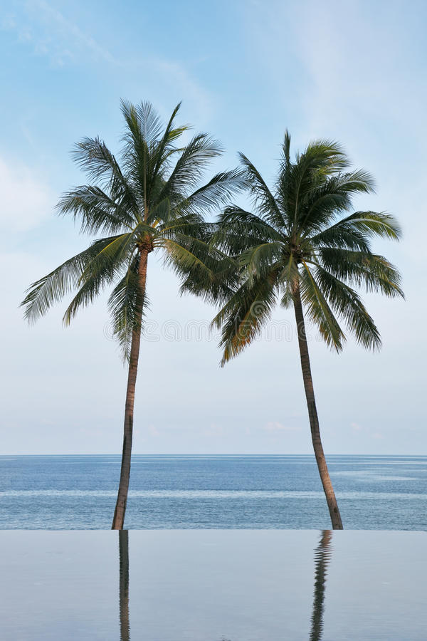 Download Two Palm Trees Are Reflected In A Water Stock Photo - Image: 23801280
