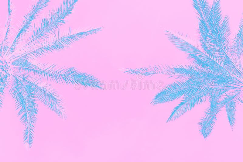 Two palm trees on sky background from low angle perspective. Toned in blue teal on gradient light pink background. Trendy neon. Colors. Minimalist surrealistic stock photos