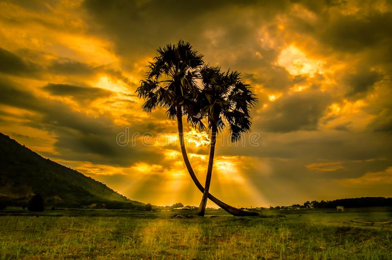 Two palm trees in the sunset sun stock photography