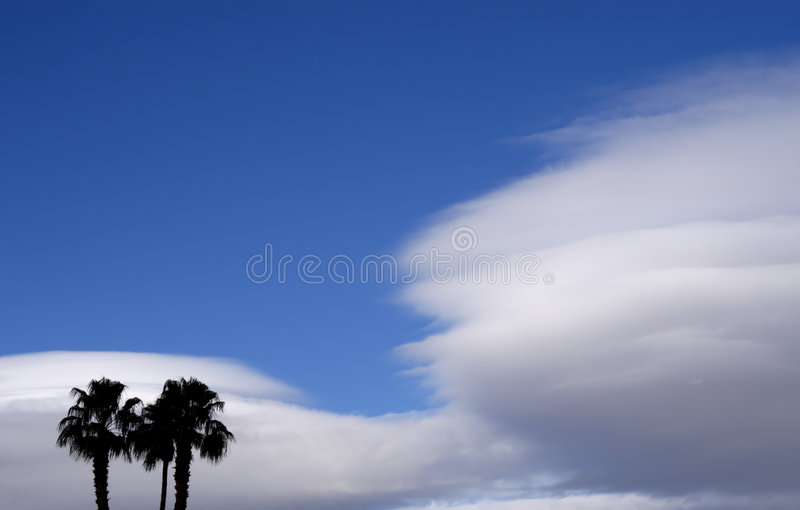 Two Palms royalty free stock images