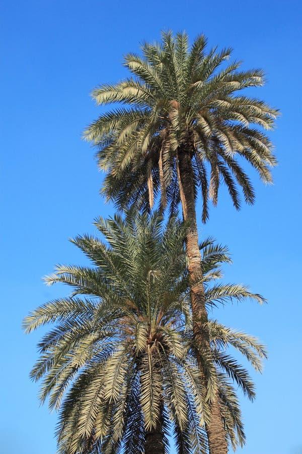 Two palms stock photos