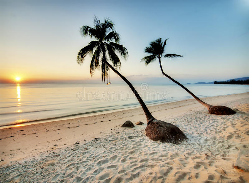 Download Two palms on a beach stock image. Image of sand, horizon - 21727695