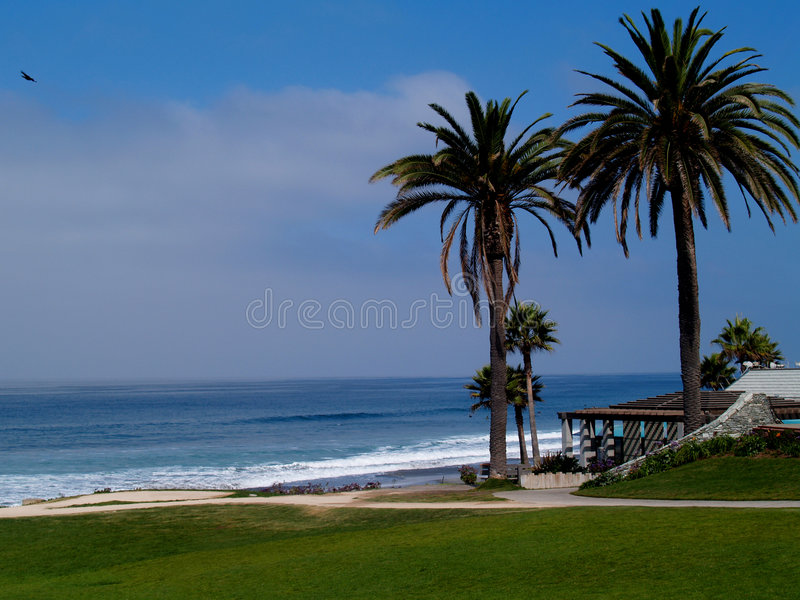 Two Palms on a beach stock photography
