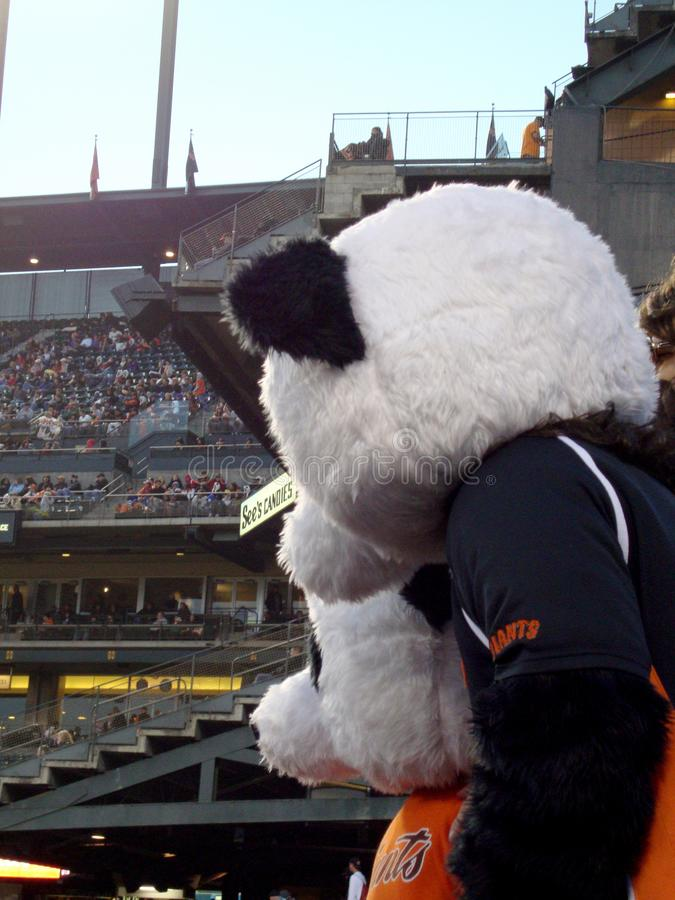 Two Panda's watch baseball game from stands stock photos