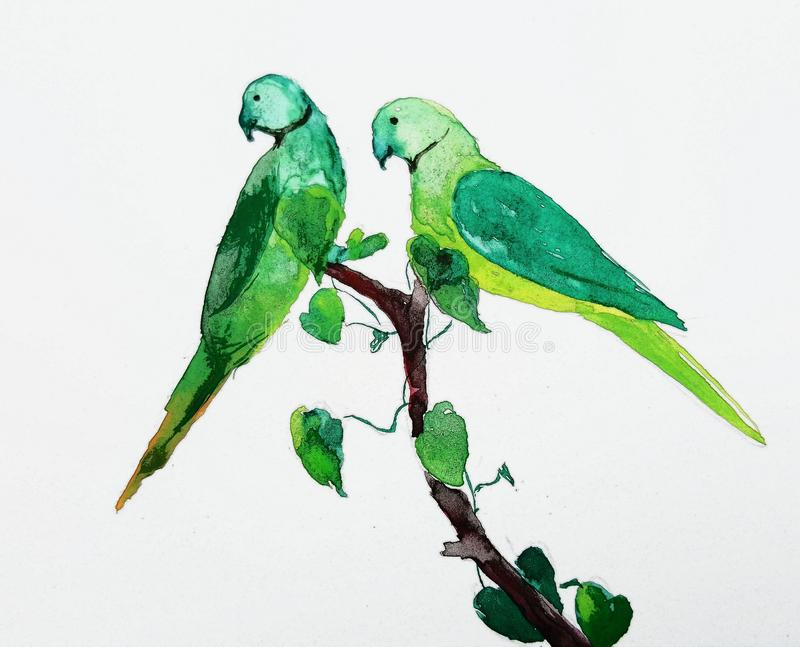 Two parakeet birds illustation. Watercolor of two rose ringed parakeet sitting on a branch with love shaped leafs stock images