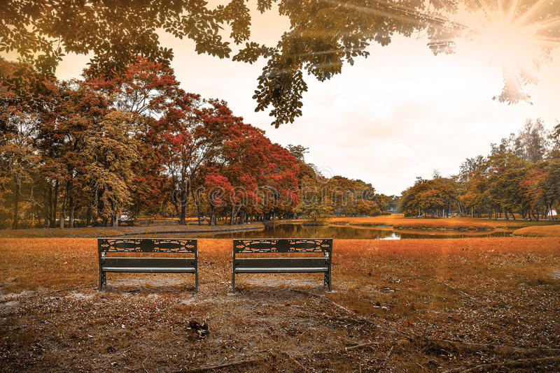 Two Park benches under tree near lake in autumn. Sunny autumn park with tree, grass ,lake and benches stock images