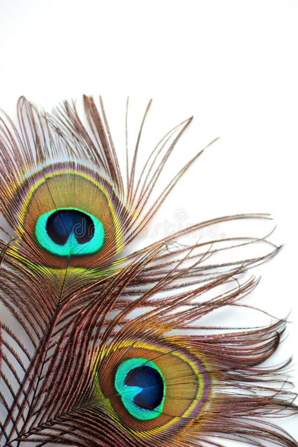 Download Peacock feather stock image. Image of beauty, elegance - 30209599