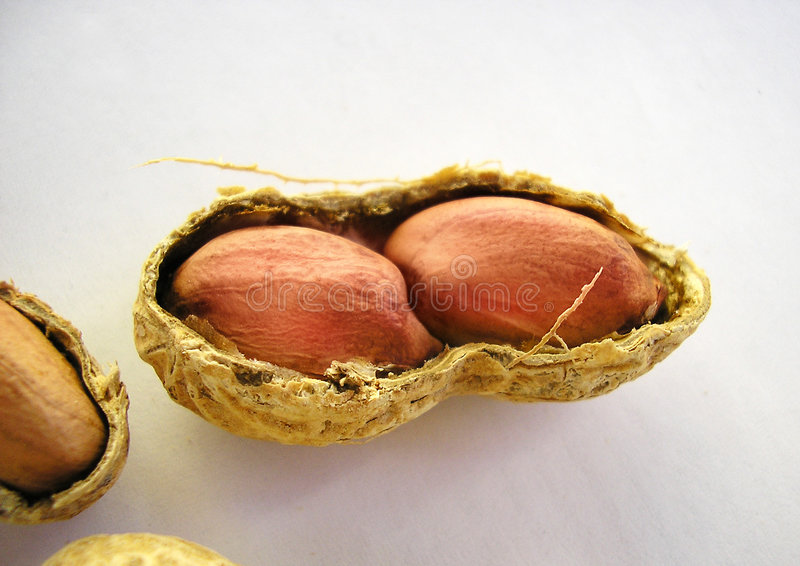 Two peanuts in a shell stock images