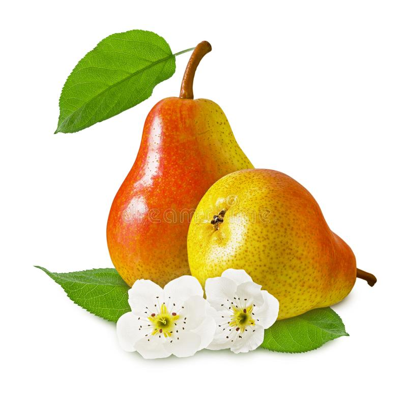 Two pears ripe juicy red yellow fruit with flower and green leaf isolated on white background as design for package. Close up stock images