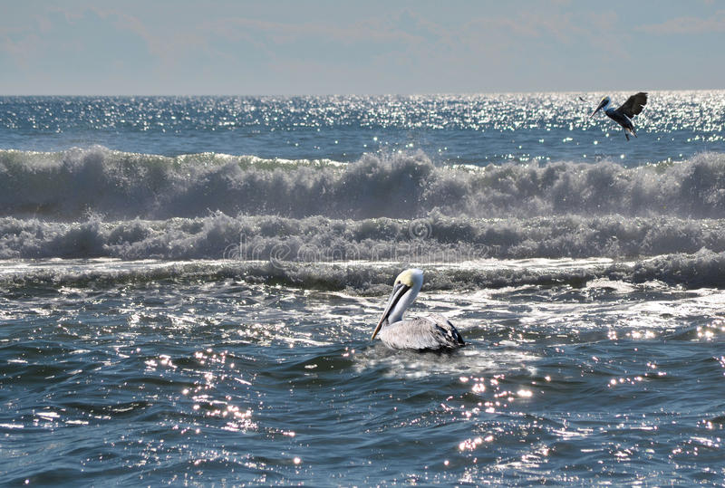 Two Pelicans Ocean Waves Bright Sun Glitter royalty free stock images