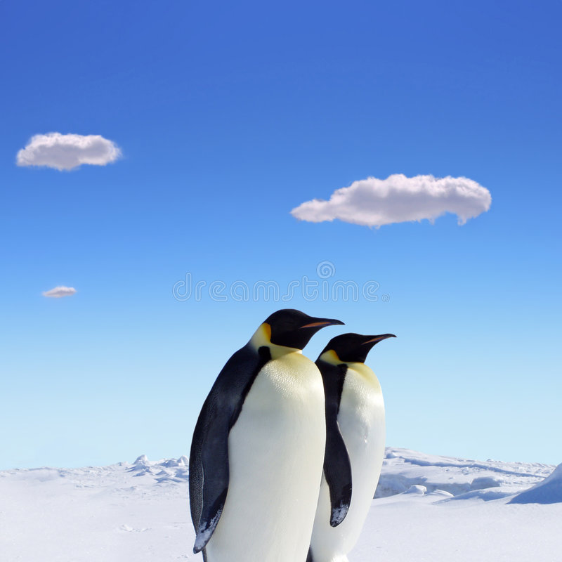 Two Penguins. At South pole, bright sunshine, snow and blue sky and clouds royalty free stock image