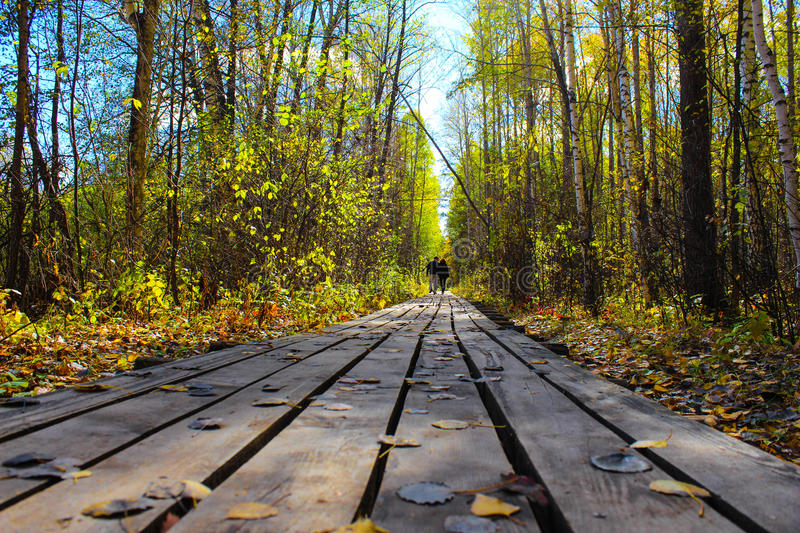 Two people are going on path of wooden boards between autumn pine forest. Two people are going on path of wooden boards between autumn pine and birch forest royalty free stock photography