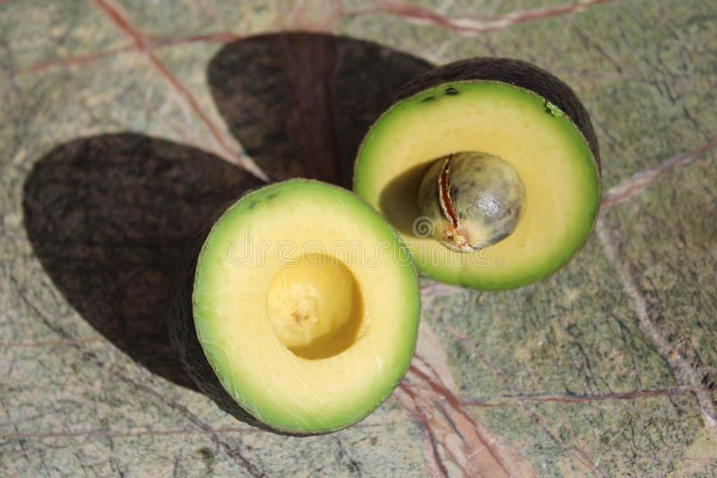 Two pieces of avocado. Avocado cut into two parts. On the rain forest stone table background stock images