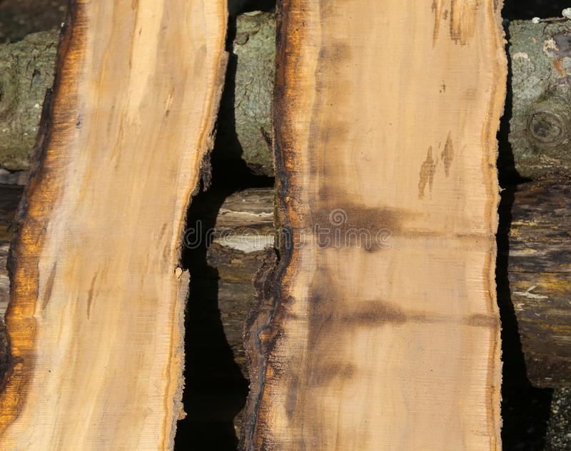 Pieces of tree trunk sawn perfectly in the sawmill. Two pieces of tree trunk sawn perfectly in the sawmill royalty free stock photo