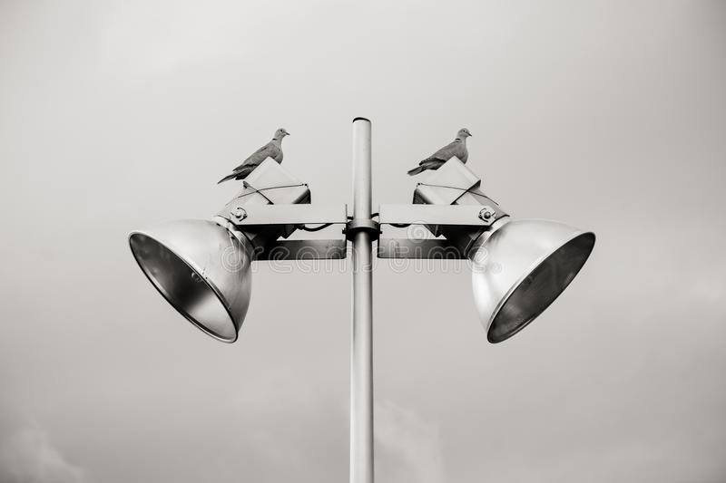 Two Pigeon Perched on White Track Light stock photos