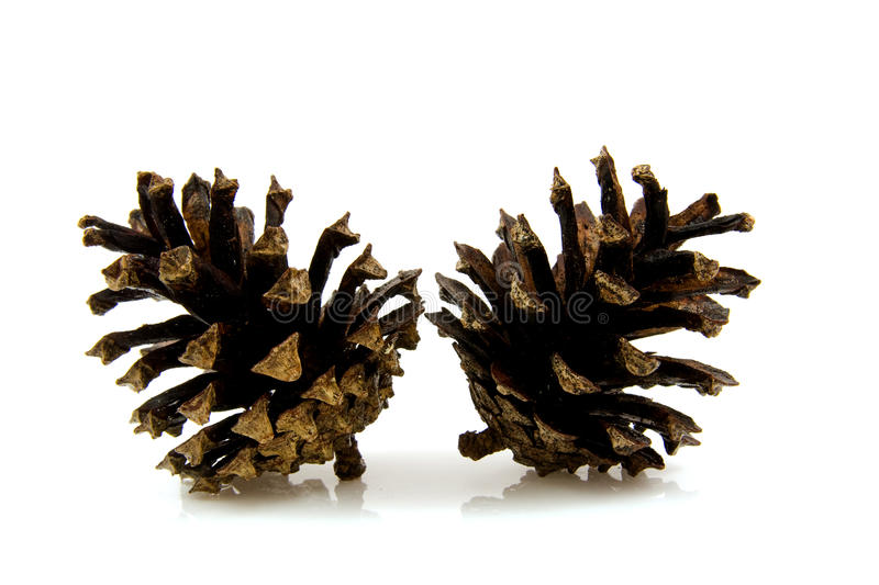 Download Two pine cones stock image. Image of brown, cone, forest - 11806311