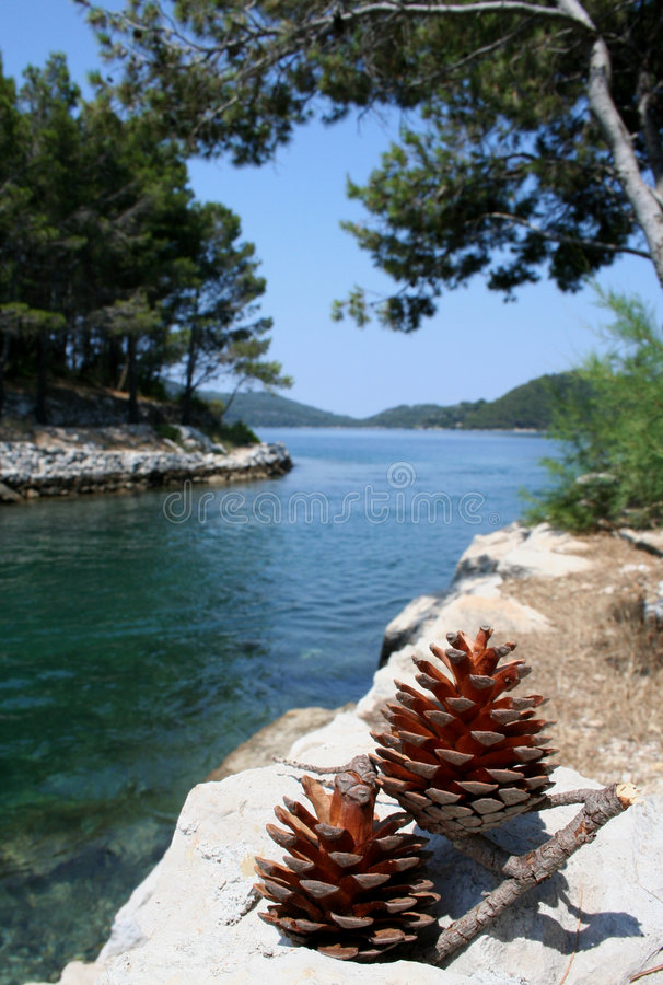 Two pine cones stock photography
