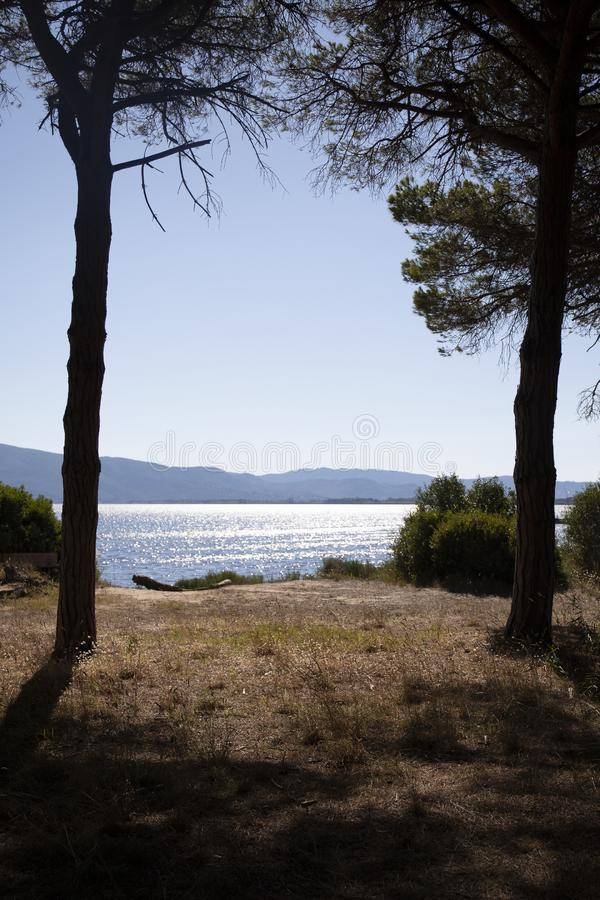 Two Pine trees and sea landscape at Orbetello wwf oasis. Patanella, Tuscany, Italy. Two Pine trees and the sea in the afternoon, Parco della Laguna di Orbetello stock image