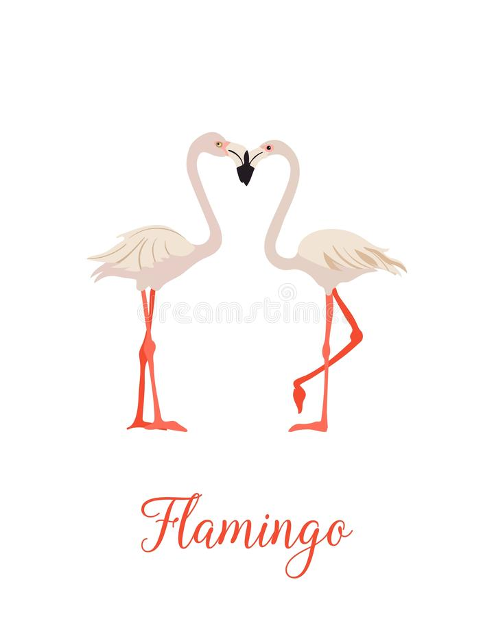 Two pink flamingo set. Exotic tropical bird. vector illustration