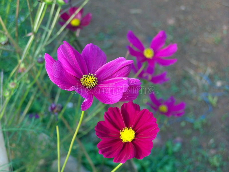 Two Pink flowers. With other flowers in the background stock images