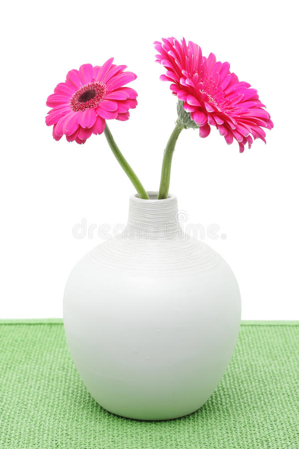 Two pink gerbera flowers in white vase stock images