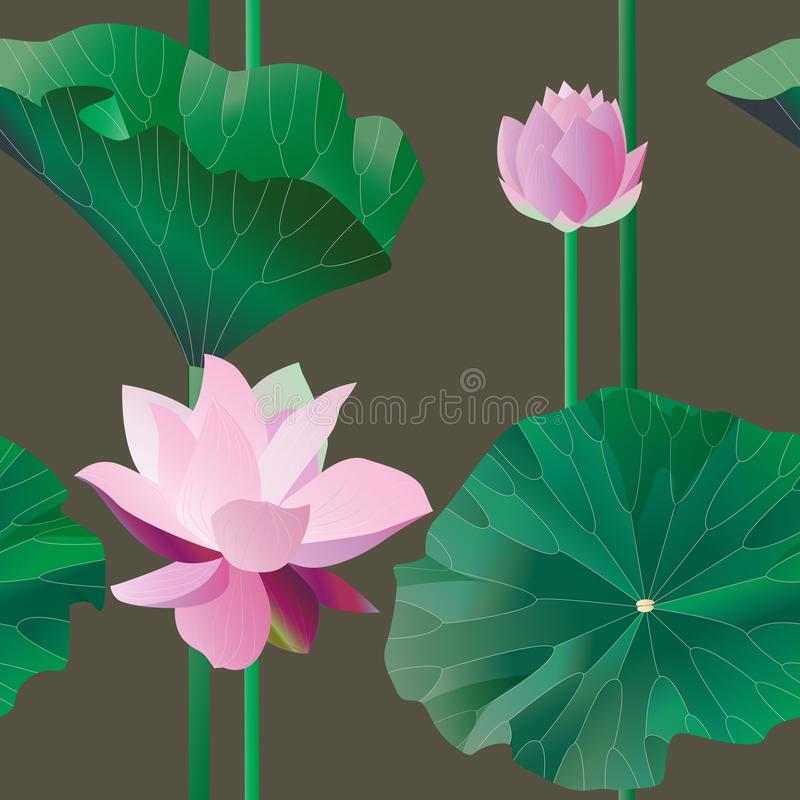 Two pink lotus on stalks with leaves on a brown background. Vect royalty free illustration