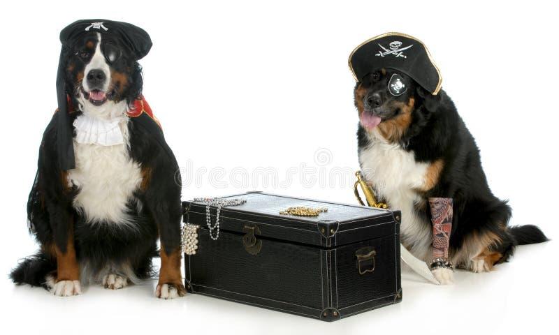 Two pirates stock image