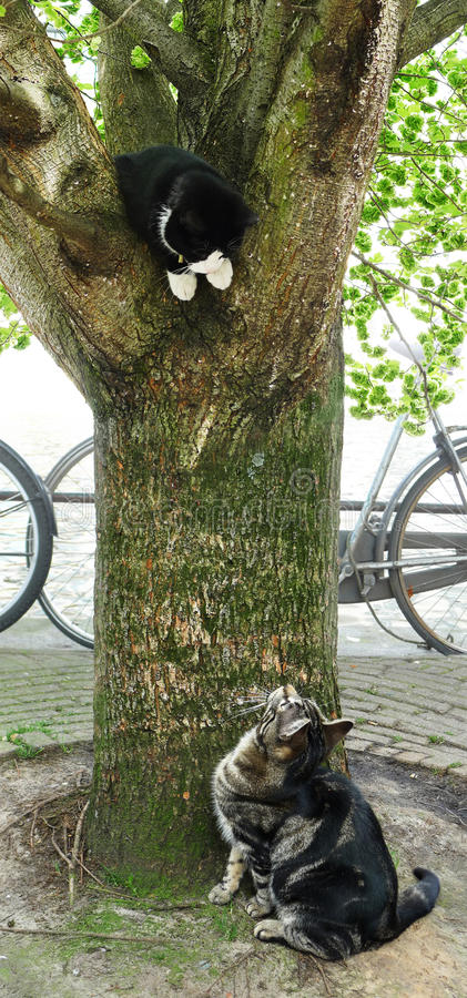Download Two Playful Cats And A Tree Stock Image - Image: 25107345