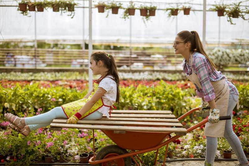 Young playful florist enjoying work while one of them riding in the cart in the greenhouse stock photography