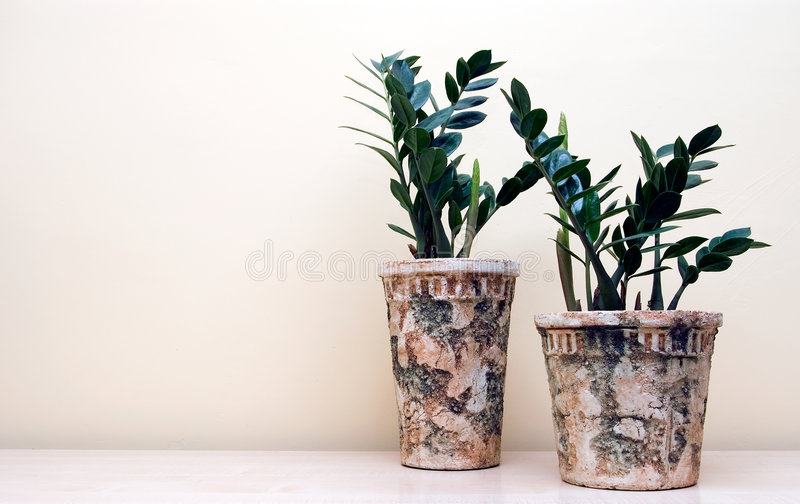 Two pot plants stock image