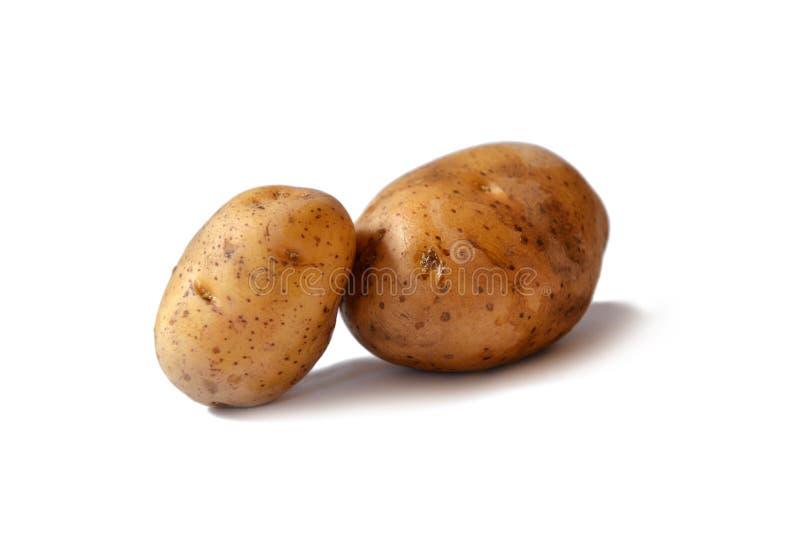 Two potato tubers on a white background. royalty free stock image