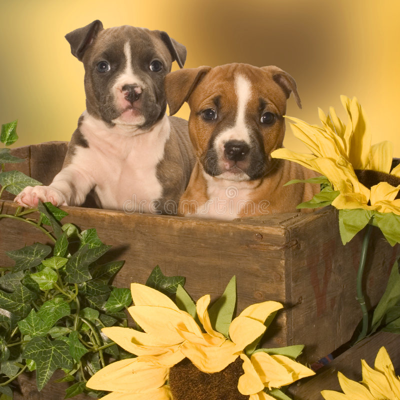 Two puppies. Puppies in a box
