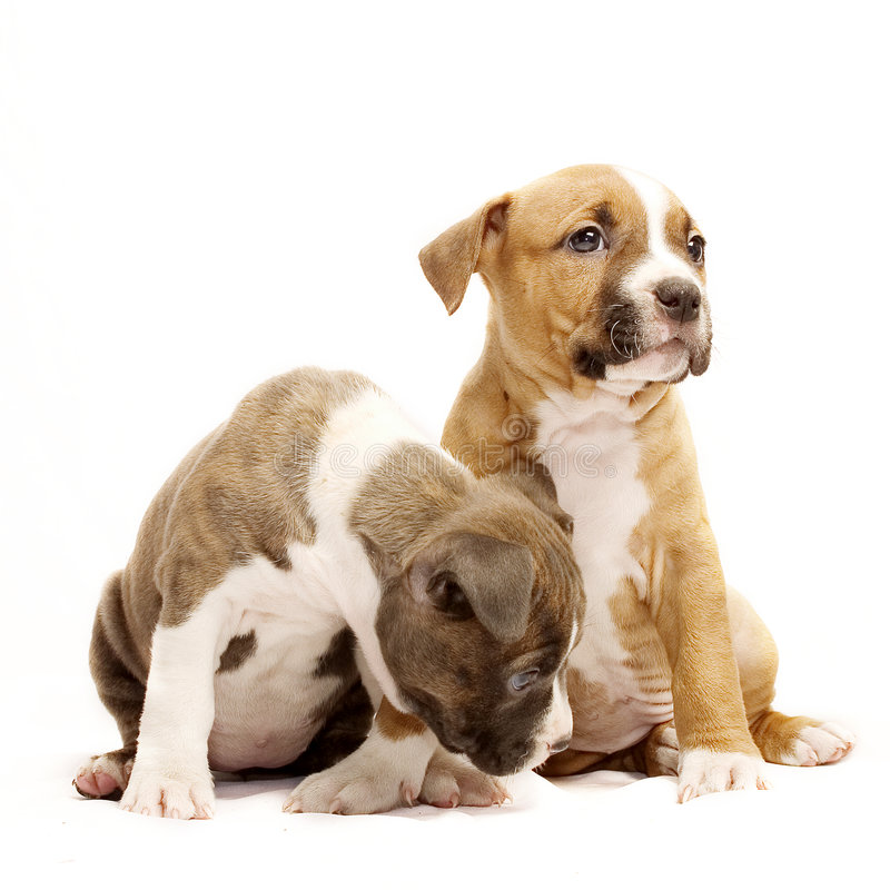 Two puppies. Cute puppies sitting next to each other stock images